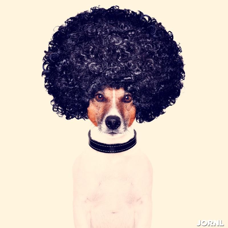 Собака с афро